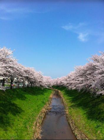 桜 奈良 癒し
